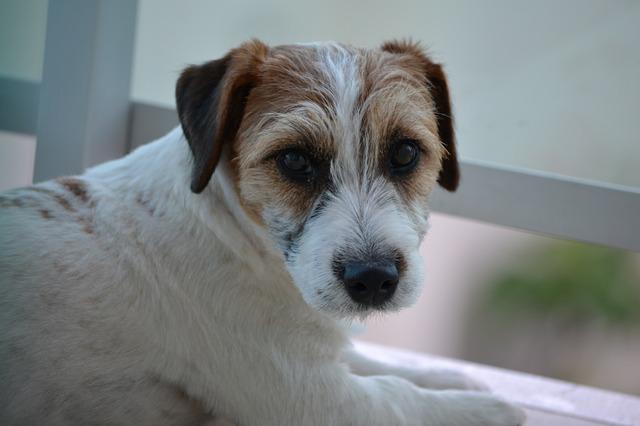 dog-1912450_640