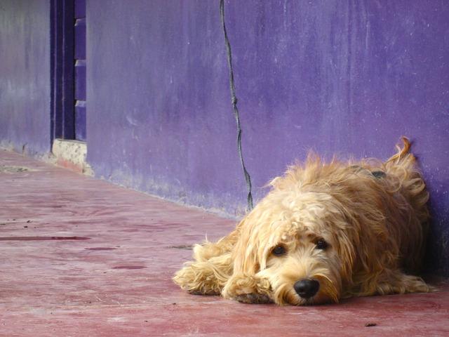 dog-1917524_640