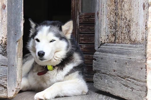 dog-1930301_640