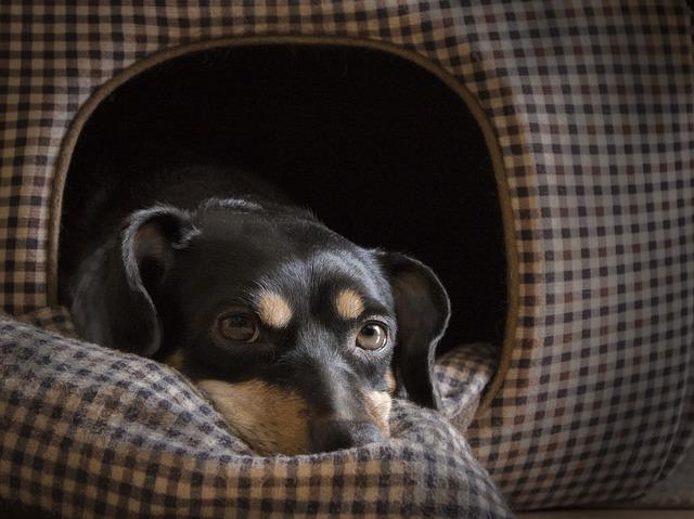 dog-1950413_640