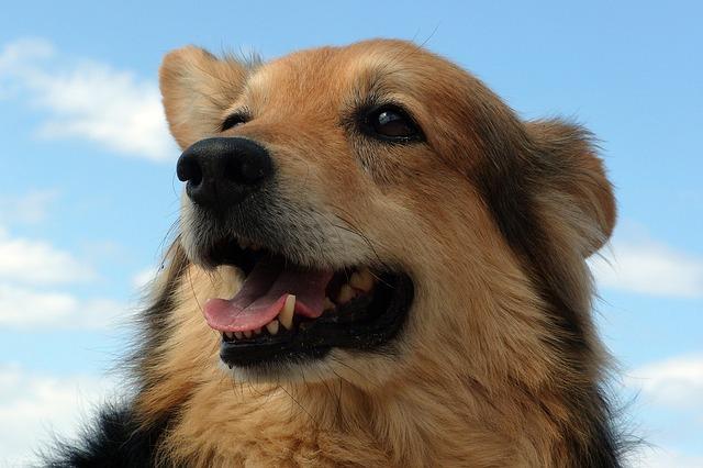dog-1967444_640