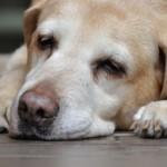 犬のしゃっくりが止まらない時の原因は?病気の可能性はある?