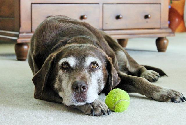 lazy-dog-1959856_640