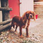 犬の軟便や嘔吐!お腹の調子を整える体質改善の方法とは?