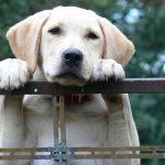 犬の皮膚のかゆみがひどい!考えられる原因と対処法とは?