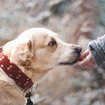 犬の免疫力を上げるには?家庭でできる方法とその効果を紹介!