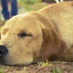 犬の体重の平均を犬種別に紹介!肥満を防ぐポイントとは?