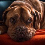 犬の腸内環境を改善するポイント&悪化した時の症状とは?