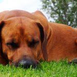 犬の食欲不振を改善するためにするべき5つのポイントを紹介!