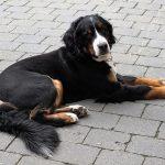 老犬の足に良いサプリメントランキング&自宅ケアのポイント