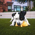 犬もパンを食べる?与える時の注意点とメリット・デメリットとは?