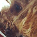 犬は大根を食べていい?与える時の注意点と健康レシピを紹介