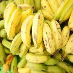 犬がバナナの皮を食べた!農薬の影響や腸閉塞の可能性は?