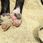 犬の肉球の怪我に効く薬や治療法は?散歩に行ってもいいの?