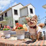 犬がかわいいのはなぜ?5つの理由を調べてみた【画像あり】