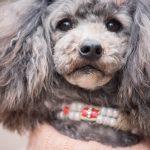 犬のアレルギーに良いシャンプーランキング5選【厳選】