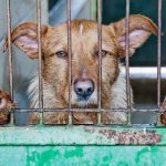 ふるさと納税で犬の殺処分ゼロへ!広島発の画期的な取り組み