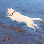 犬の関節に良いサプリを徹底比較!おすすめ5選