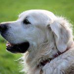 犬の寿命ランキングTOP10!もっとも長生きする犬種とは?