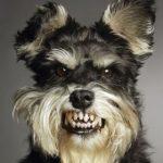 犬のしつけ!吠えるのを直して散歩のトラブルを解消する方法