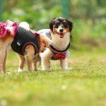 犬との信頼関係の築き方!しつけに最も大切な3つの基本とは?