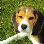 犬の臆病を克服させたい!社交的な性格に変える3つの秘策