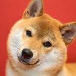犬のアレルギー検査の費用はいくら?保険で調べる方法とは?