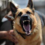 犬が嫌がる音とは?無駄吠えのしつけに使える3つのアイテム!