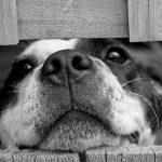 犬の視力は白黒しか見えないって本当?目の仕組みを徹底解明