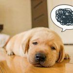 犬の顔が片方だけ腫れているので原因を知りたい人
