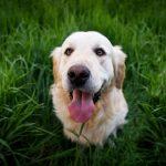 ドッグランのマナー違反!嫌われる飼い主&犬の行動とは?