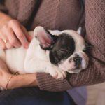 犬がうんちを食べるのはなぜ?原因と5つの対処法