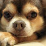 犬が怒る原因&対処法!根本的に改善する3つの方法とは?