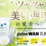 geleeWAN乳酸菌の口コミ&評判!最安値の販売店は?