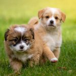 犬のウンチが柔らかい原因は?フードの量は関係あるの?