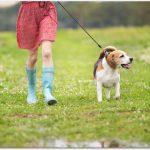犬のわがままはしつけで直せる?再教育のための5箇条!