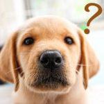 ニュートロ(犬)の値段!楽天・Amazon最安値はどっち?