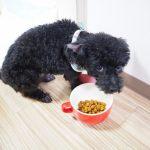 犬の避妊後におすすめのドッグフード10選【厳選】
