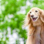 犬の名前ランキングTOP10!オス・メス別でご紹介!