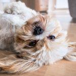 犬のために床を滑り止めにしたい!誰でもできる7つの方法【厳選】