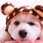 犬の皮膚病で目の周りが赤いのはなぜ?気になる原因をご紹介!