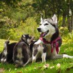 犬の避妊手術の時期とは!何歳までにやっておくべき?