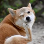犬が皮膚病で赤い!体をかゆがる場合に注意したい病気とは?