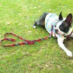 犬のリード!おすすめランキングTOP10