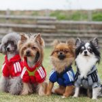 犬の洋服!通販で買える人気ブランド厳選5選