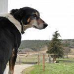 犬がトイレを失敗する・・・老犬にも有効な4つのしつけ対策とは?