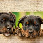 犬の皮膚病の原因とは!生活習慣や遺伝は関係あるの?