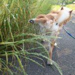 犬のトイレのサインとは?よくある5つの行動の意味を徹底解説!