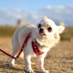 犬のハーネス!かわいいランキングTOP10
