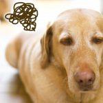 犬が吐く原因とは?突然の嘔吐や繰り返す理由を徹底調査!